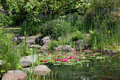 Summer Water Garden Royalty Free Stock Photo
