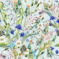 Summer watercolor seamless floral pattern with wild flowers Royalty Free Stock Photo
