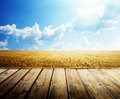 Summer wheat fieldn floor Royalty Free Stock Photo