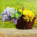 Summer wicker basket with yellow dandelions flowers and lilacs on a meadow Royalty Free Stock Photo