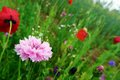 Summer wild flowers profusion Royalty Free Stock Photo