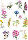 Summer wild plants collection Royalty Free Stock Images
