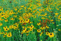 Summer Wildflower Meadow Royalty Free Stock Photo