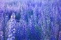 Summer wildflowers. Flower meadow in bloom Royalty Free Stock Photo