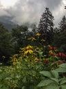 Summer wildflowers in the smokies Stock Photo