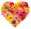 Summers flowers heart Royalty Free Stock Photo