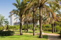 Summertime in city park gravelly lane among palms a valencia spain Royalty Free Stock Image