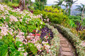 The Summit Gardens - Port Vila Royalty Free Stock Photo