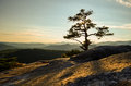 Summit of stone mountain north carolina a lone tree stands tall on the in alleghany county Royalty Free Stock Image