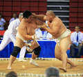 Sumo wrestling in action Stock Photo