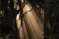 Sun beams in forest mystical Stock Images