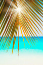 Sun beams through green and gold palm leaves on blue sea white sand Seychelles background Royalty Free Stock Photo
