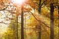 Sun beams through leafage in autumn Royalty Free Stock Photo