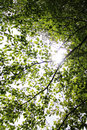 Sun behind the leaves in the tree crown