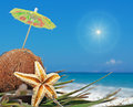 Sun and coconuts with small umbrellas under a shining Royalty Free Stock Image