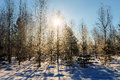 Sun In The Cold Winter Forest