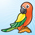 Sun Conure (tropical bird) Royalty Free Stock Photography