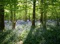 Sun dappled bluebells Royalty Free Stock Photo