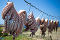 Sun dried octopus traditional fishing in greece oregano rubbed tentacles drying the outside of seaside tavernas are a surprisingly Royalty Free Stock Image