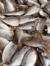 Sun dried and salt preserved fish Stock Photography