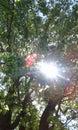Sun escapes