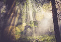 Sun flares in forest go through the fog or smoke between green leaves the Stock Image