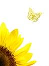 Sun flower a closeup shot of a Stock Image