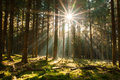 Sun in the forest is shining through trees Royalty Free Stock Image