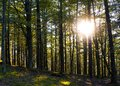 Sun between forest trees, Aiako Harriak natural park, Euskadi Royalty Free Stock Photo