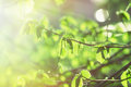 Sun illuminate spring leaves rays of the morning Royalty Free Stock Images