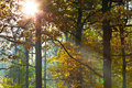 Sun light through leafage in autumn forest Royalty Free Stock Photo