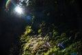 Sun light streaming through the trees Royalty Free Stock Photo