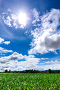 The sun in the mid day blue sky and green field Royalty Free Stock Photo