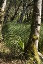 Sun moss grass trunk Stock Images