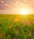 Sun over a field Royalty Free Stock Images
