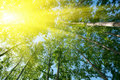 Sun over foliage Royalty Free Stock Image