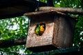 Sun Parakeet and Nanday Parakeet Couple at Parque das Aves - Foz do Iguacu, Parana, Brazil Royalty Free Stock Photo