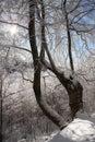 Slnečné lúče proti lesu v zime