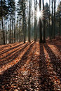 Sun rays in the autumn forest Stock Images
