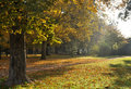 Sun Rays in Autumn Park Royalty Free Stock Images