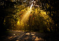 Sun rays beam passing through tree branches like a of light Royalty Free Stock Images