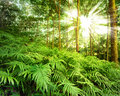 Sun rays in forest tropical rain Stock Photos