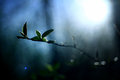 Sun rays glare leaf buds branches spring of the Royalty Free Stock Images