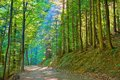 Sun rays in green deciduous forest nature reserve trail by pieniny national park Stock Photo