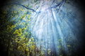 Sun rays shining through trees Royalty Free Stock Photo