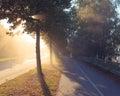 Sun rays through tree next to a road