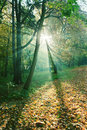 Sun rays between trees in forest mystical green Stock Photo