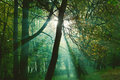 Sun rays between trees in forest mystical green Royalty Free Stock Images