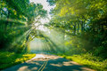Sun rays through trees on road forest with light beams and green Stock Photography