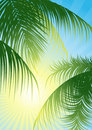 Sun_rays_through_the_tropical_leaf Stock Images